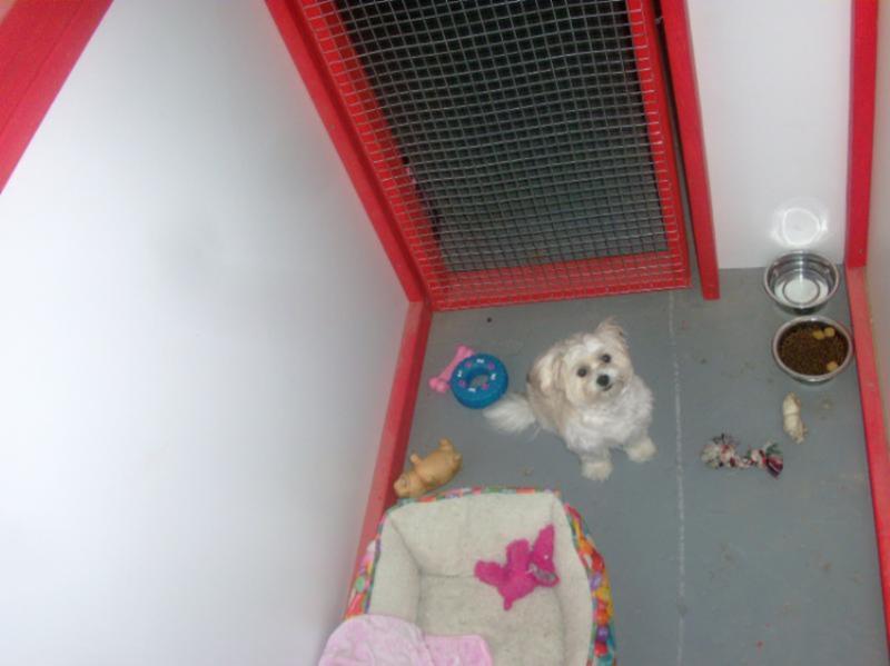 centre canin de laval horaire d 39 ouverture 1275 rue saint nicolas laval qc. Black Bedroom Furniture Sets. Home Design Ideas