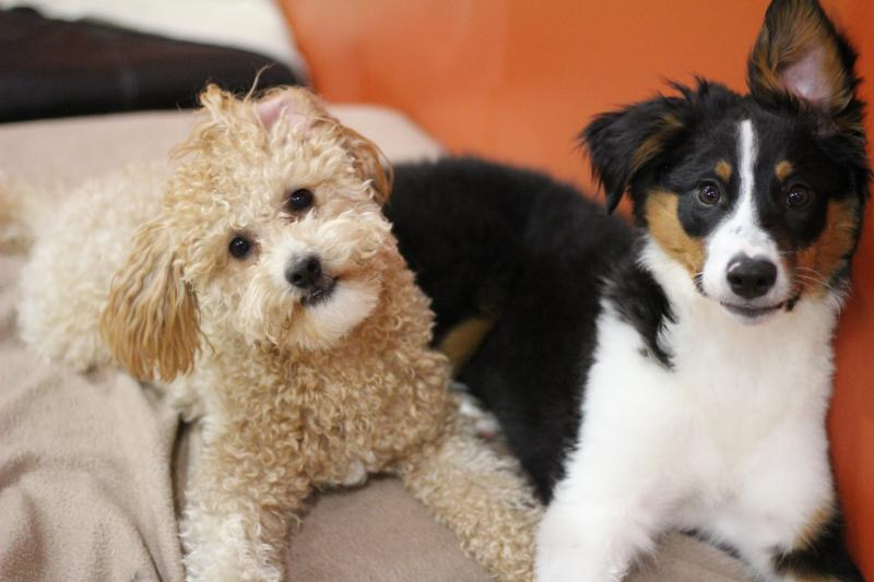 Dapper Dog Daycare And Grooming Port Coquitlam Bc