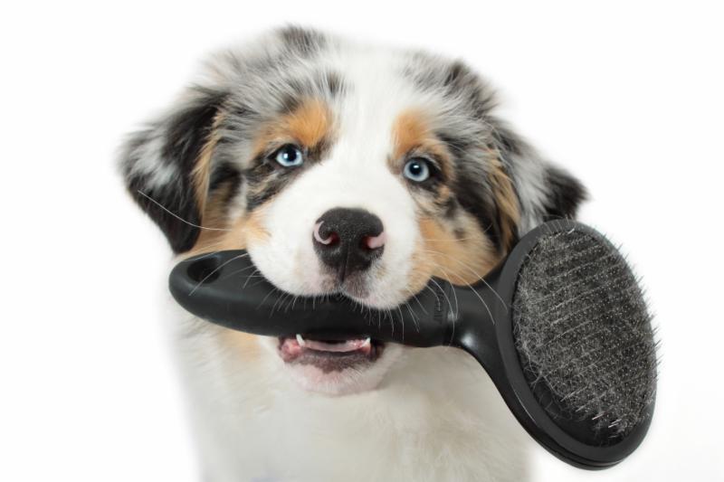 Dapper Dog Grooming Regina