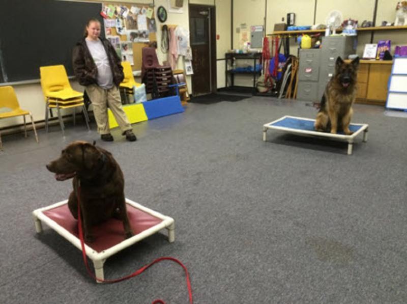 Dog Grooming School Montreal