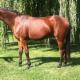 Jack Pine Equestrian Centre - Riding Academies - 519-371-0717