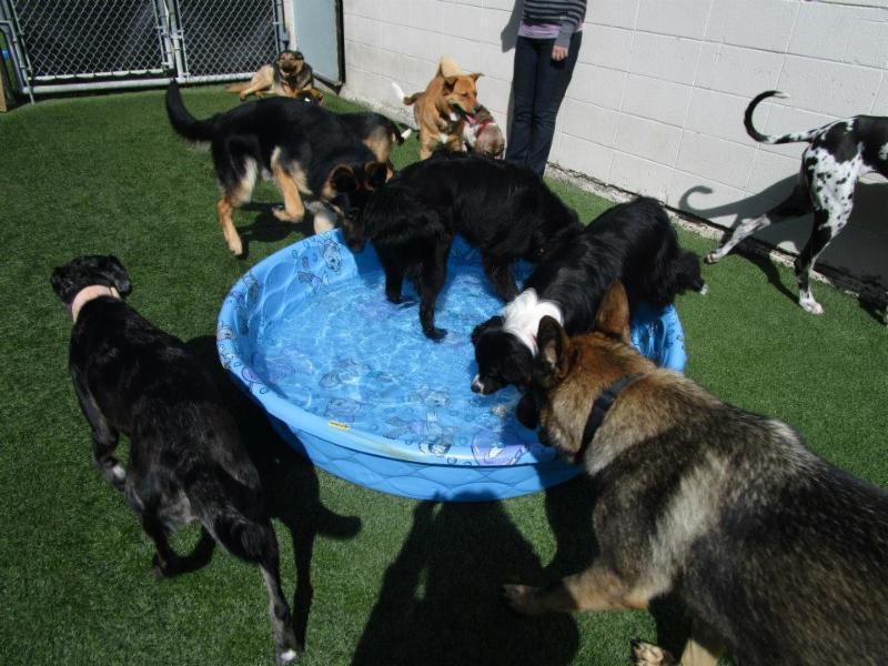 Dog Daycare Sherwood Park
