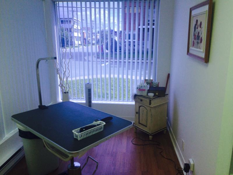 Manjo salon de toilettage granby qc 12 84 rue du for Salon de toilettage montreal