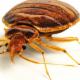 Extermination Guylaine Tremblay - Pest Control Services - 5142168005