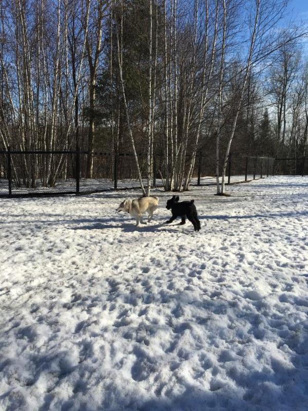 Offrez à votre chien des vacances en campagnes à seulement 20 de l'ouest de l'île de Montréal.
