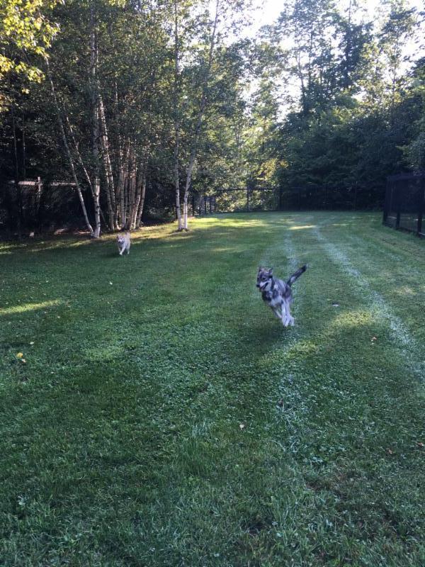 Pour les chiens qui aiment avoir de la compagnies nous avons une grande cours extérieur ou ils peuvent courir.