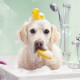 Harmonimaux - Magasins d'accessoires et de nourriture pour animaux - 450-622-5160