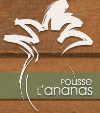 Pousse l 39 ananas opening hours 6346 rue saint hubert montr al qc - Comment pousse l ananas ...