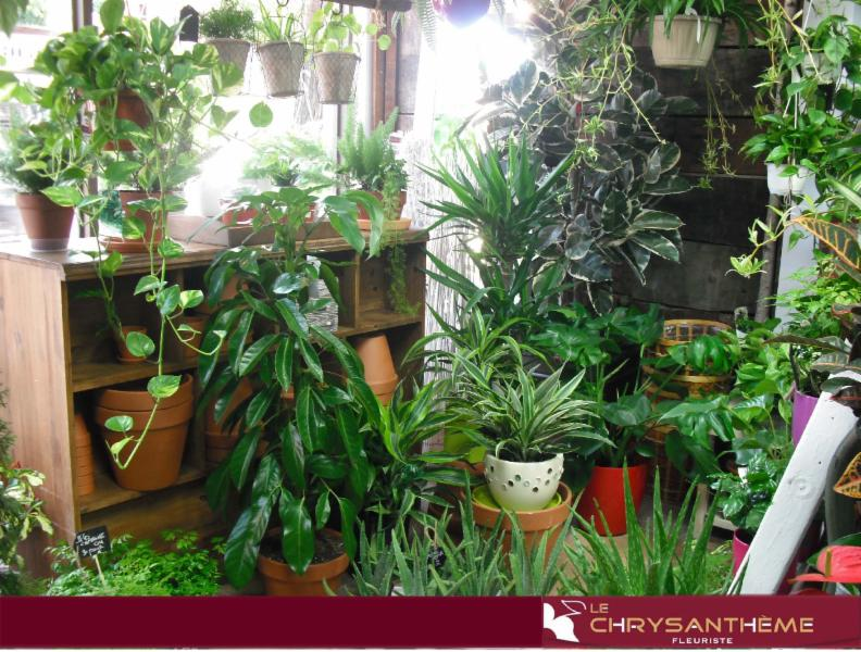 We have a large varieties of green plants, flowers and plant gardens