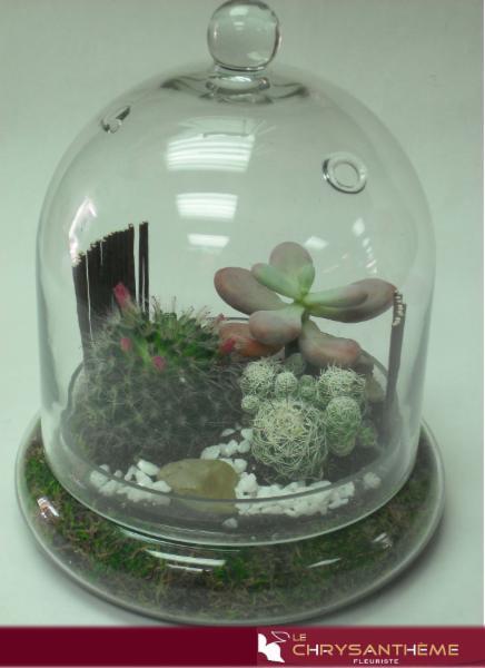 Succulents & Cactus Terrarium