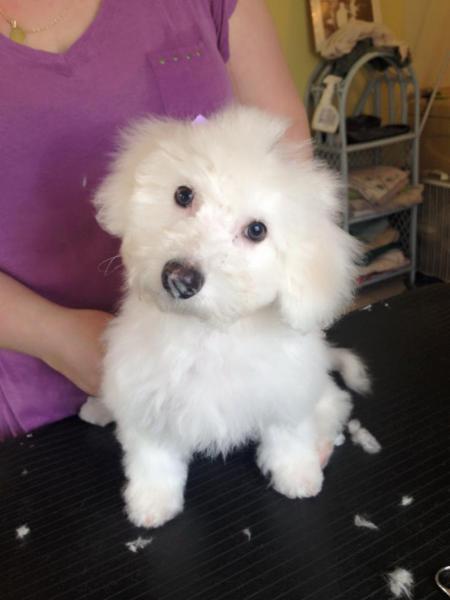 Annette S Dog Grooming Orillia