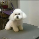 Diana's Grooming - Pet Food & Supply Stores - 9023681500