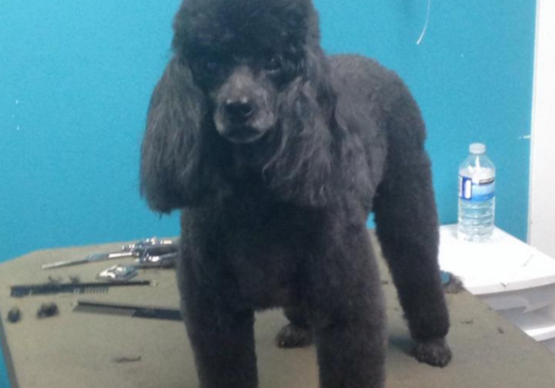 Dog Grooming Services In Langley Bc