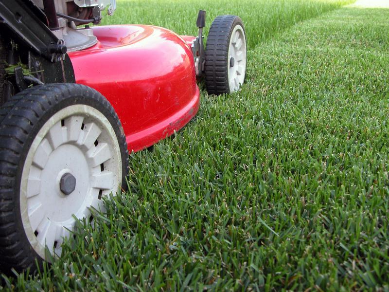 Tonte de pelouse tonzy gazon horaire d 39 ouverture for Gazon tonte