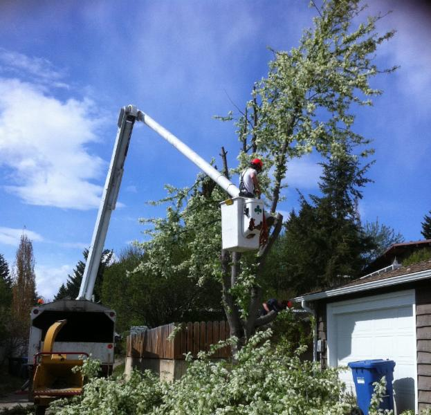 Aerial Lift Tree Removal