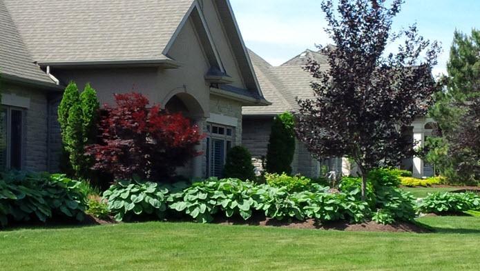 Maple Leaf Lawn Maintenance Canpages