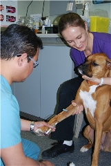 photo Kato Animal Hospital
