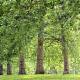 Alberta Tree Spraying - Gestion immobilière - 4036200044