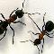 Aggressive Pest Control - Pest Control Services - 6044665193