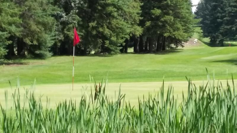 A view of the green looking thru the reeds.