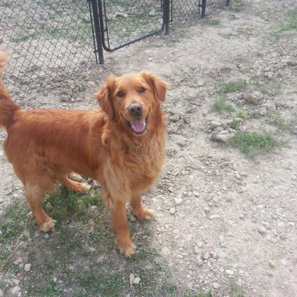 Spirited farm pet boarding merlin on 5700 14th line for Dog boarding places near me