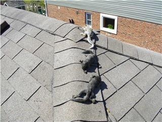 Baby squirrels on the roof?     We'll remove and relocate them in a humane as safe way.