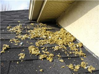 Evidence that you may have animals nesting in your attic.