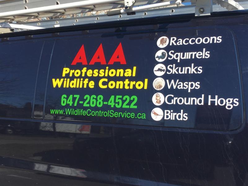 AAA Professional Wildlife Control