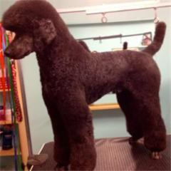 Dog grooming Etobicoke