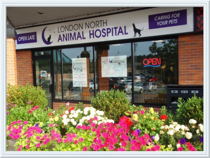 animal hospital opening hours 22 735
