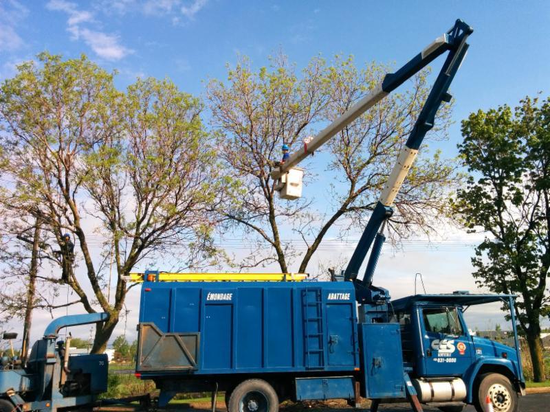 Les travaux d'élagage représentent une des spécialités de CCS horticole. Nos experts ciblent les arbres et enlèvent les branches affaiblies ou malades qui sont potentiellement nuisibles ou dangereuses.