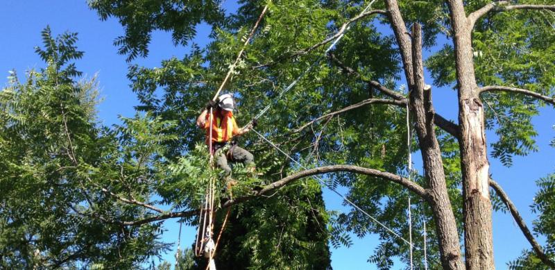 Calgary Tree Services Ltd - Calgary, AB T1Y 2G2 - (403)605-1422 | ShowMeLocal.com