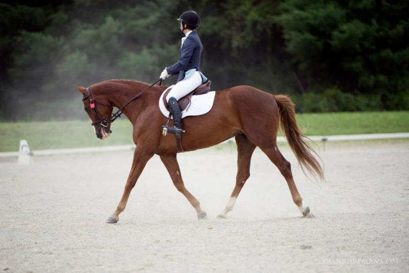 Cazador Equestrian - Vineland, ON L0R 2C0 - (905)929-7891 | ShowMeLocal.com