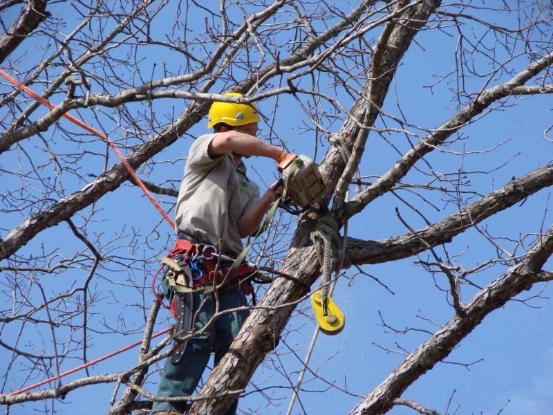 Tree Trimming: The Different Tools That Are Used For the Job