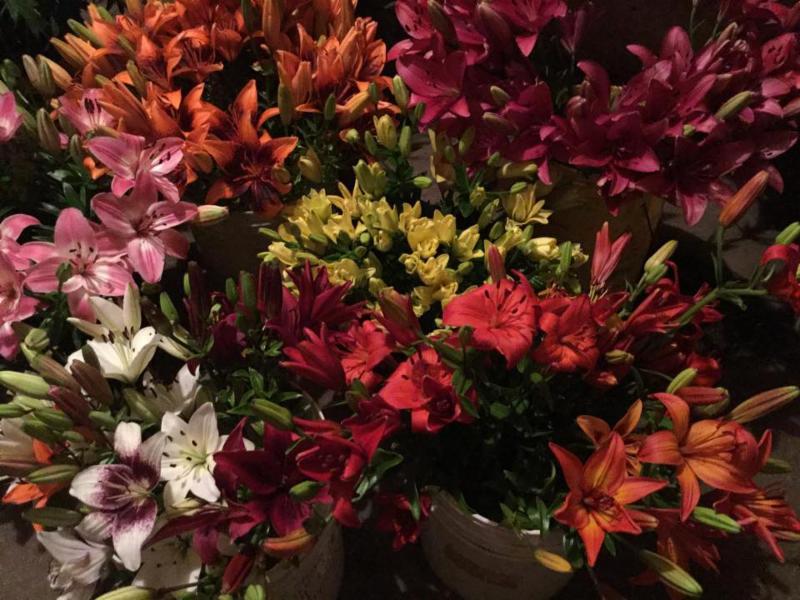 Fleurs de mon jardin et des champs montr al qc 138 av for Fleurs et arbustes de jardin