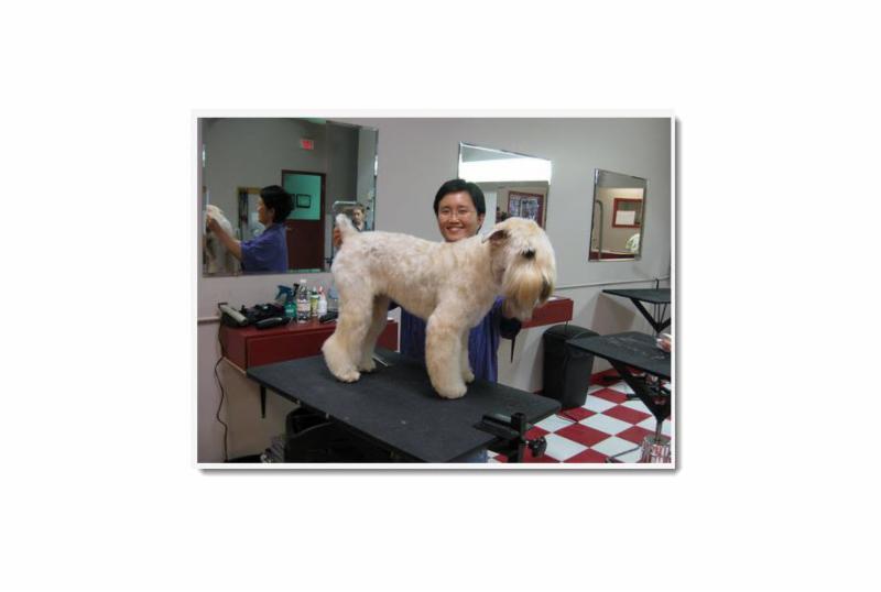 Dog Grooming Woodbridge Ontario