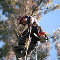 View Arborstrong Tree Service's Collingwood profile