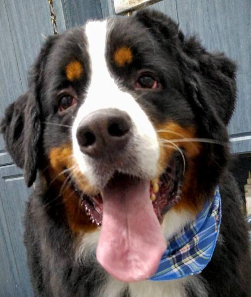 Salon laurence toilettage pour toutes races de chiens for Salon toilettage chien