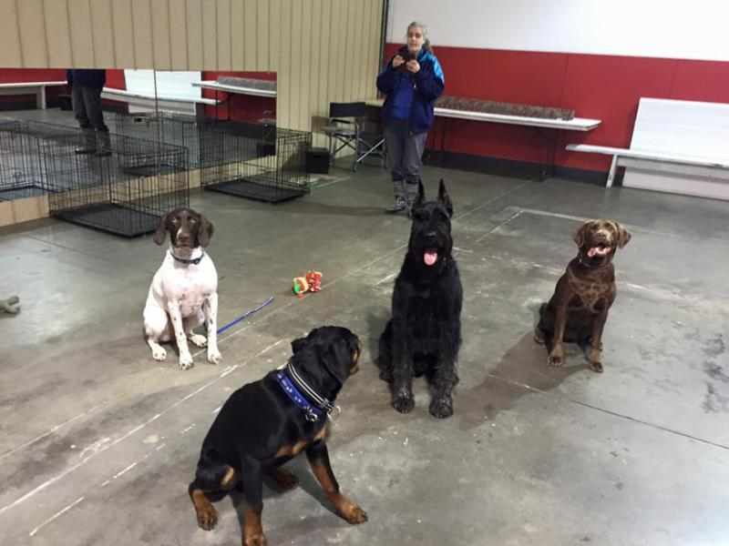 Dog Grooming Classes Vancouver