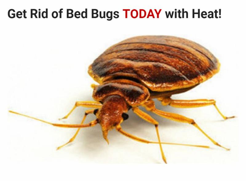 Pharmacy Avenue Bed Bugs