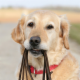 The Happy Tails Dog Walking & Petcare - Garderie d'animaux de compagnie - 416-948-2631
