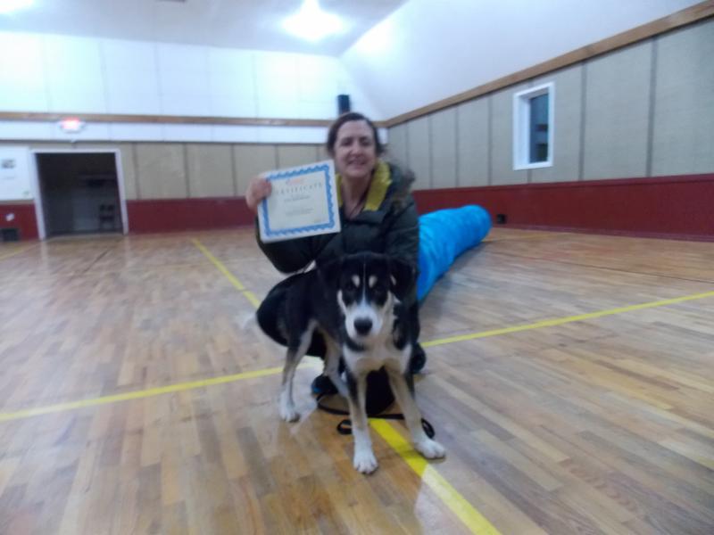Dog Agility Training Edmonton