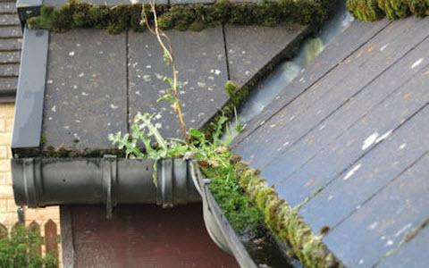 Plante entretien ext rieur qu bec qc 7249 rue des for Entretien hibiscus exterieur