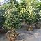 Plantex Enr - Pépinières et arboriculteurs - 450-293-4367